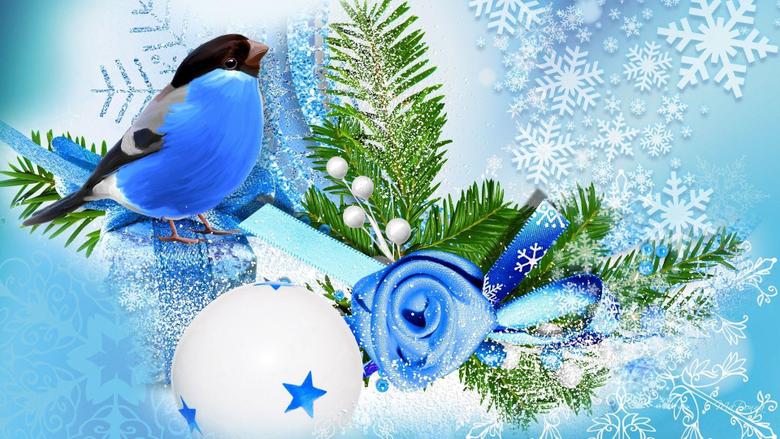 Blue bird winter season wallpapers