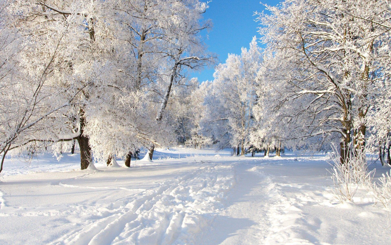 Nature Winter Season Trees Fresh Backgrounds Wallpapers HD
