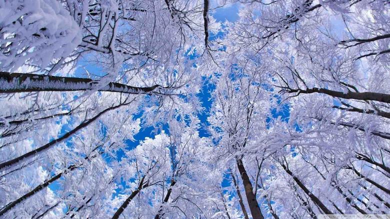 Winter Season Latest HD Wallpapers