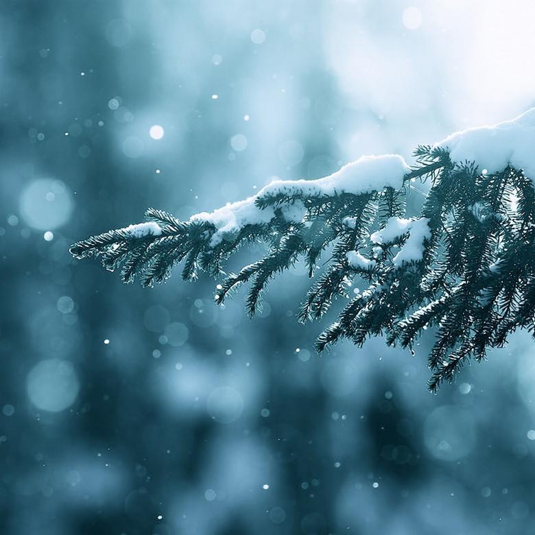 Winter Season Snow Trees Lens Flare iPad Air Wallpapers