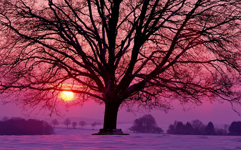 naturee Trees Landscapes Sunsets Sunrises Sun Winter Seasons Wallpapers HD Desktop and Mobile Backgrounds