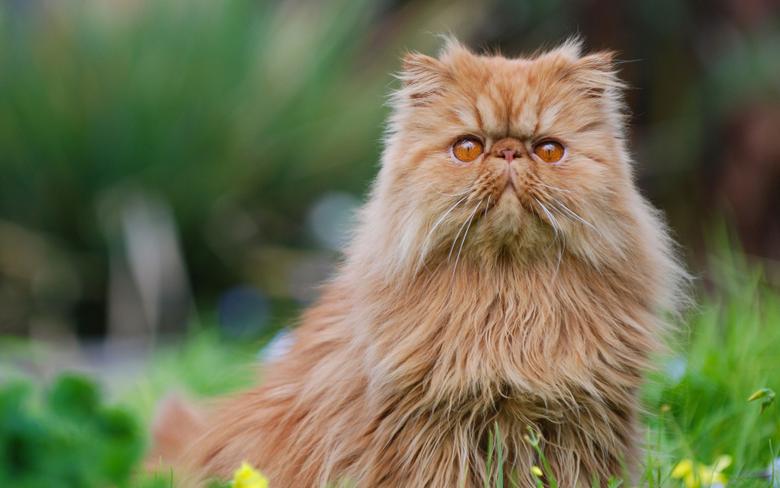 cats breeds of fluffy cats kitten besthqwallpapers