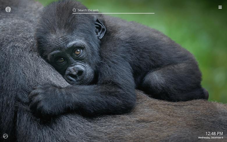 Gorilla HD Wallpapers New Tab Theme
