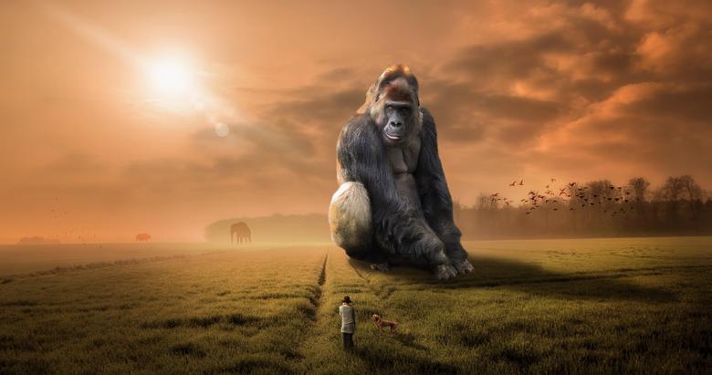 Wallpapers Gorilla Landscape Woman Sunset Dawn Dream Monkey 5K