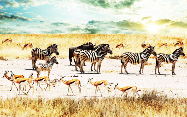 Central Wallpaper Colors of Nature Zebras HD Wallpapers