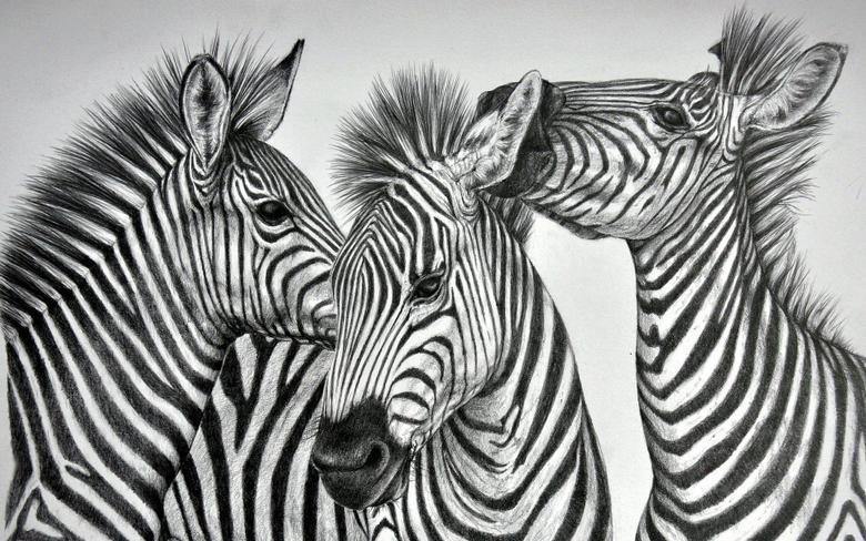 animals desktop image mobile wallpapers three wall murals