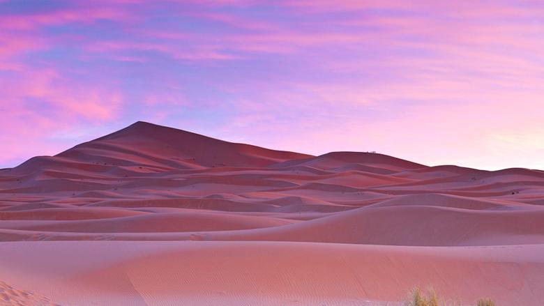 Palm trees Sahara Desert Morocco Wallpapers