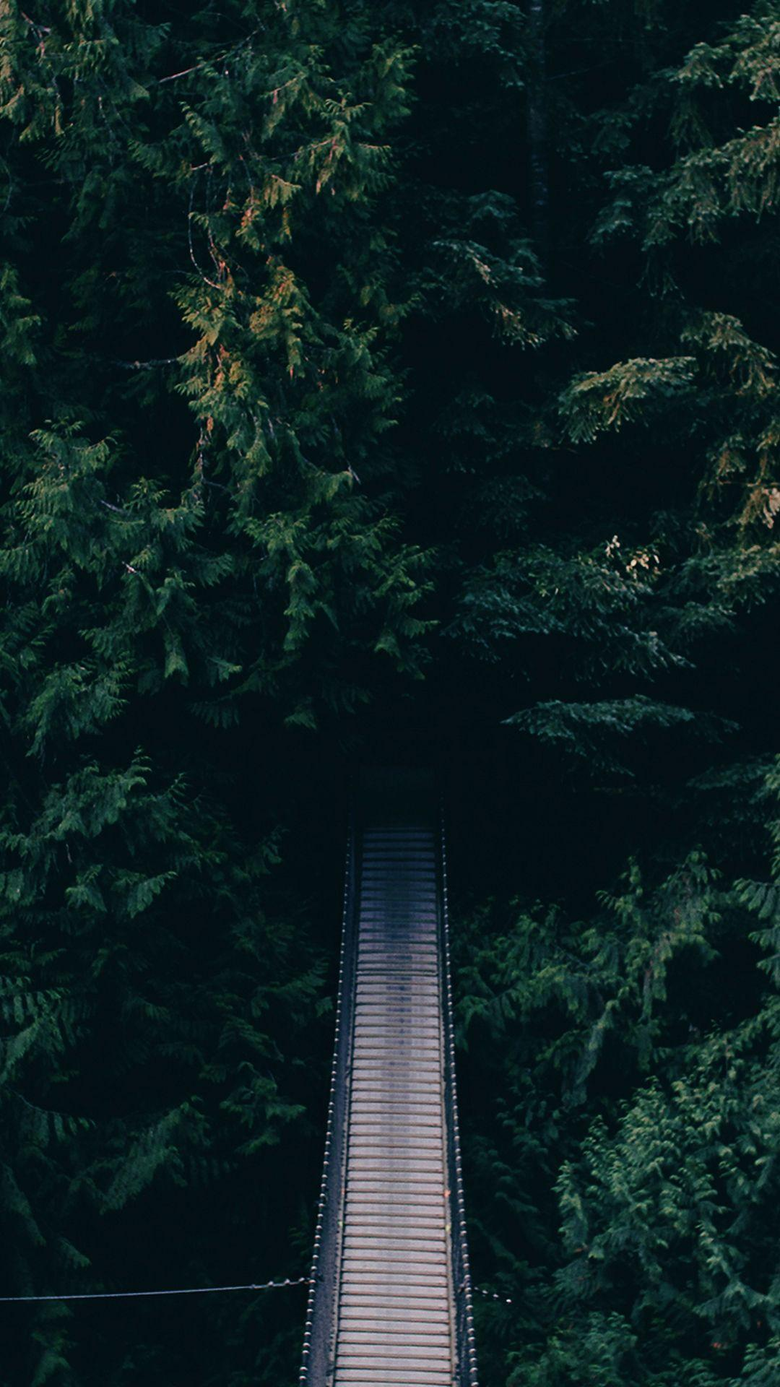 Dense Green Forest Bridge Android Wallpapers