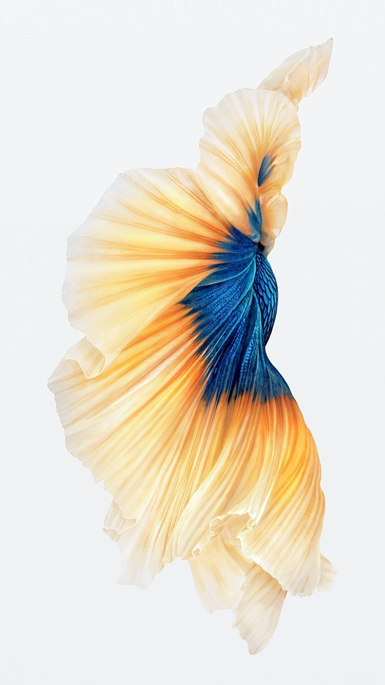 iPhone 6s still wallpapers image
