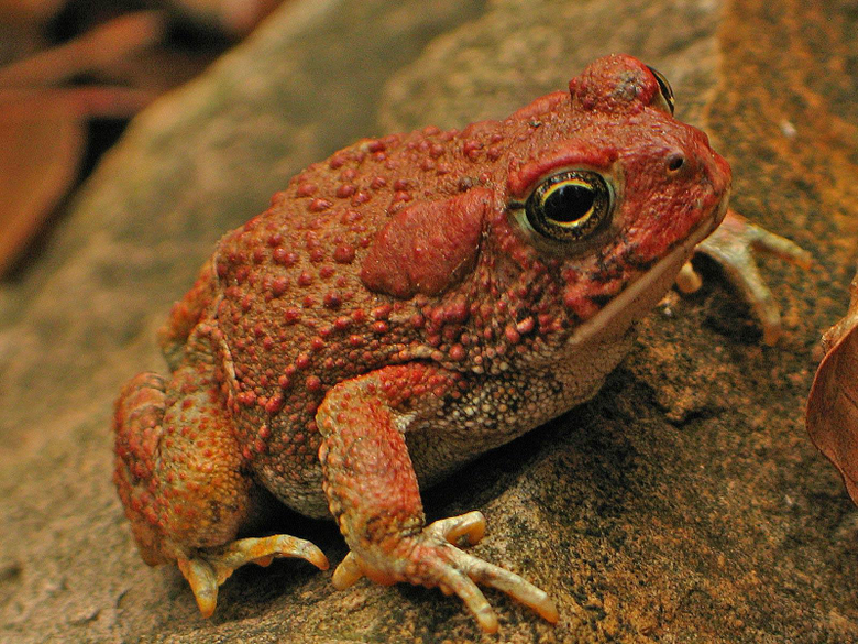 Best 67 Toad Wallpapers on HipWallpapers