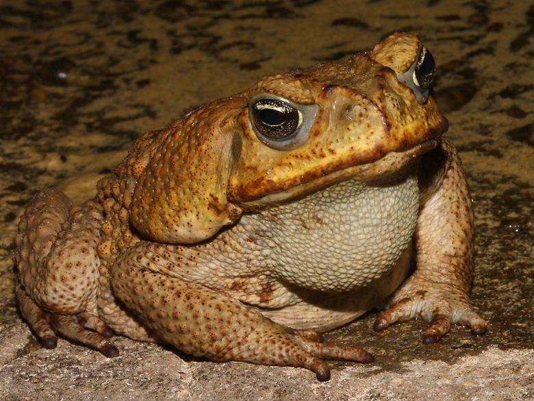 women as toads