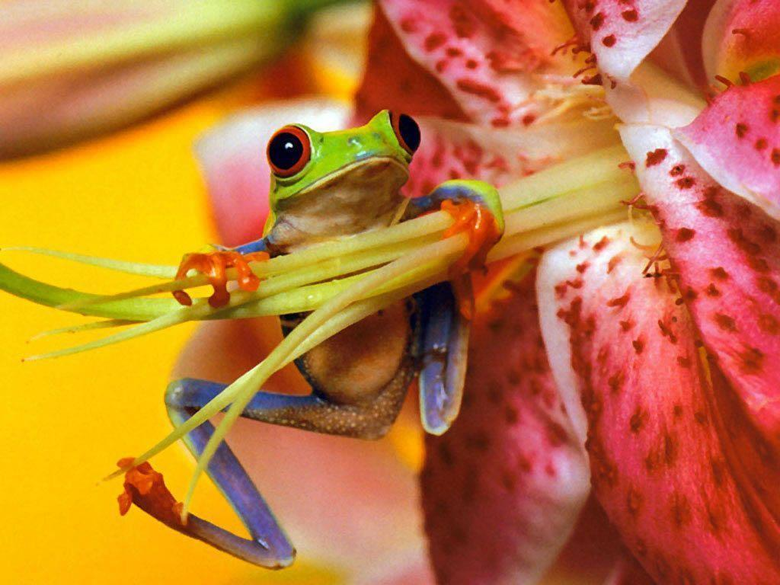 Frogs Back Frog Full HD Wallpapers Wallpapers HD