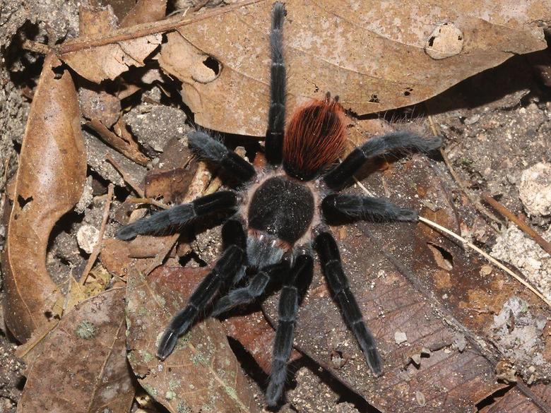 best Tarantulas image