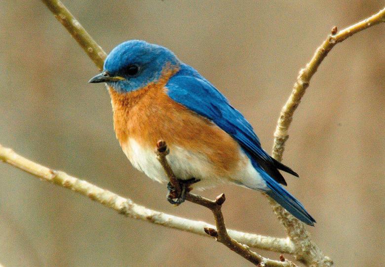 Blue Bird HD Wallpapers 10272 1800x1249px