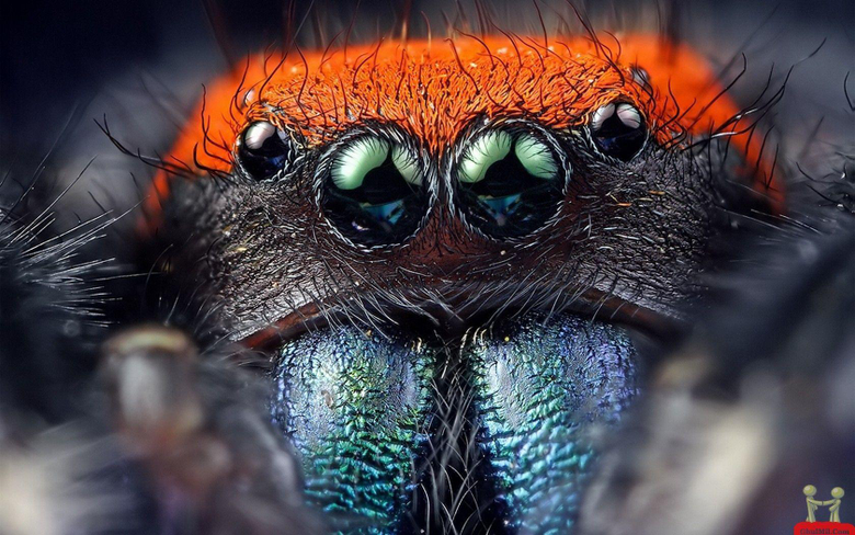 Natural Spider 8 Eyes HD Wallpapers