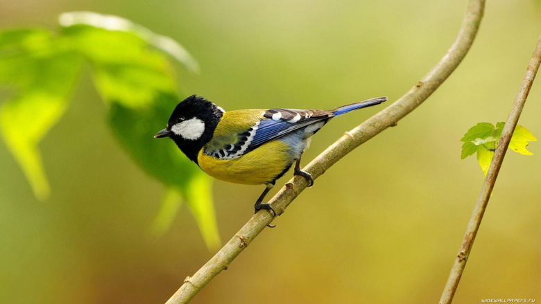 Desktop Wallpapers Birds HD Birds Birds Wallpaper Birds
