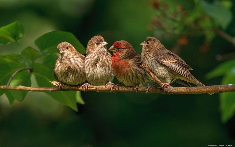 Nice Birds HD Wallpapers
