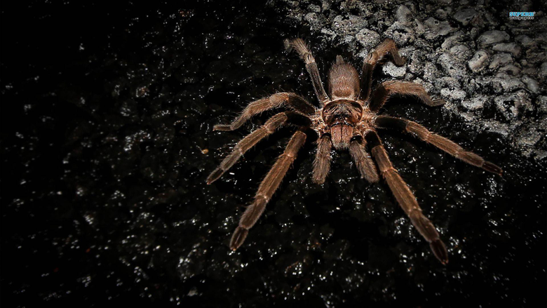 HD Collection Spider Wallpapers
