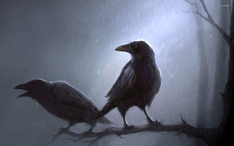 Crows standing in the rain on the branch wallpapers