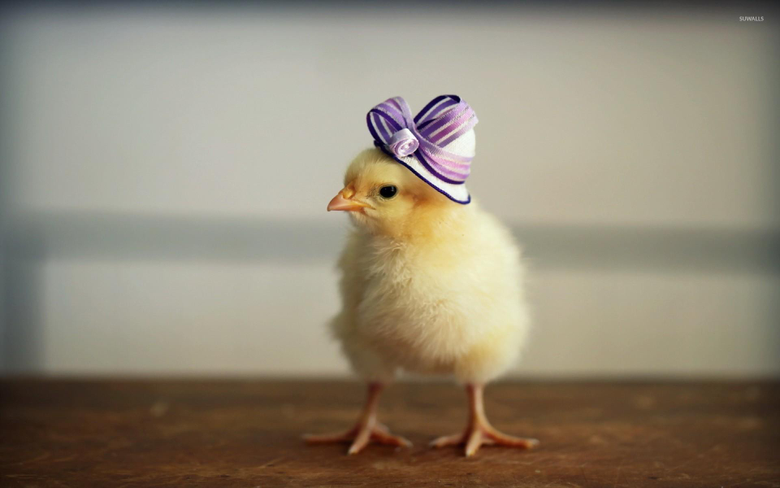 Chick with a purple hat wallpapers