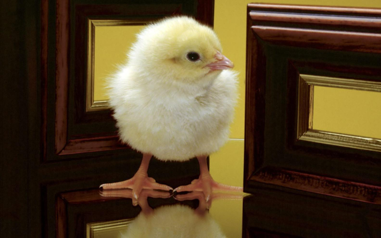 Cute Easter Day Chick Wallpapers wallpapers Wallpapers