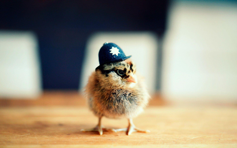 Police chick Wallpapers