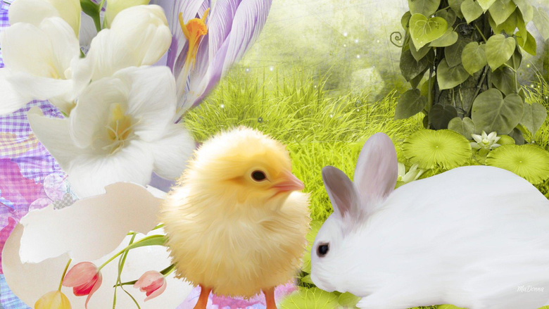 Bunny and Chick Easter Wallpapers