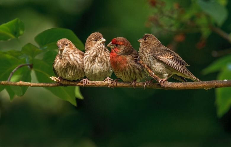 Wallpapers birds branch family finches image for desktop