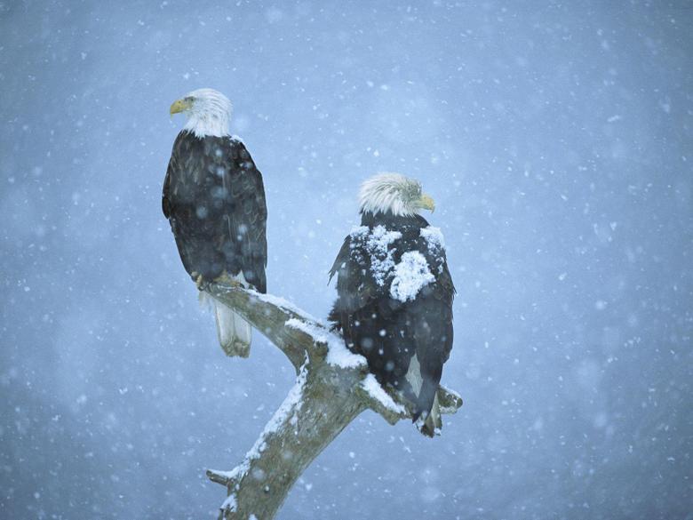 Winter Birds Desktop Wallpapers