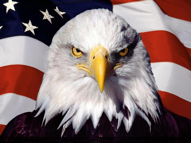 Image For 3d Eagle Wallpapers Desktop