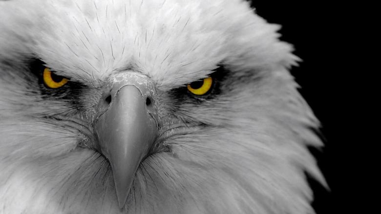 Full HD 1080p Eagle Wallpapers HD Desktop Backgrounds 1920x1080