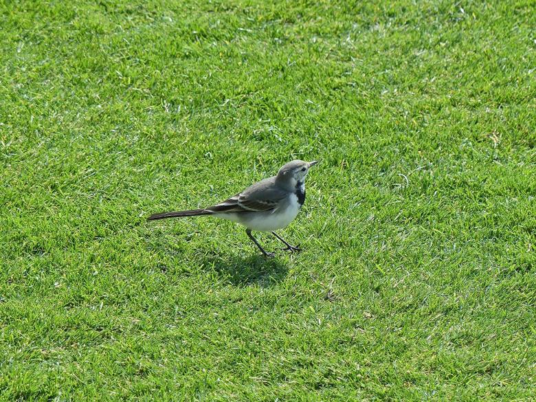 Birding On A Cruise To Spain