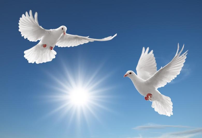 Break comcs Pigeon Dove Family Columbidae Wallpapers