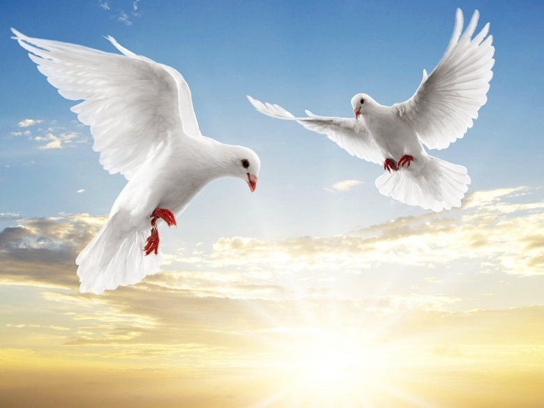 Dove HD Wallpapers