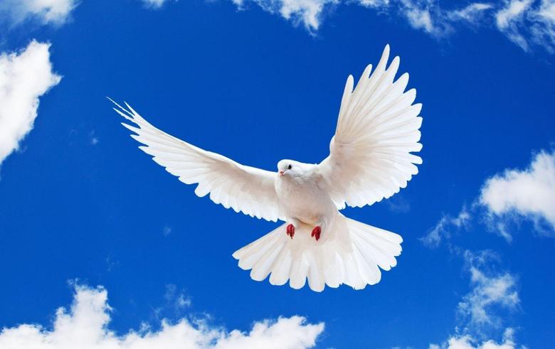 Top 79 Dove Wallpapers