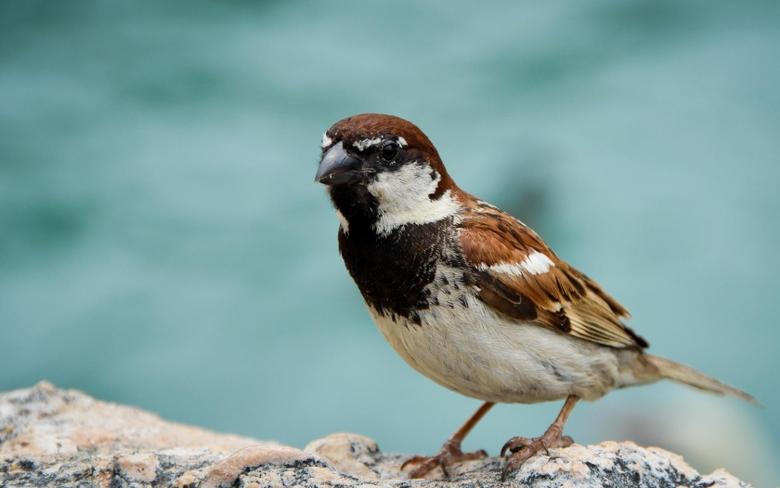 Best 40 Sparrow Wallpapers on HipWallpapers