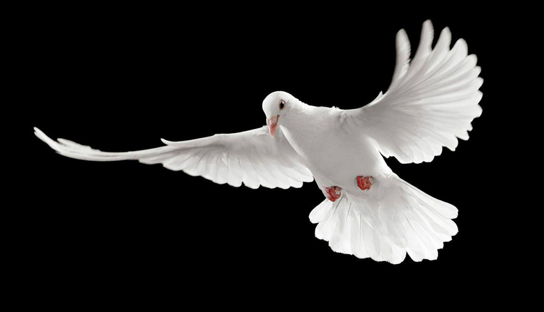 white pigeon grit