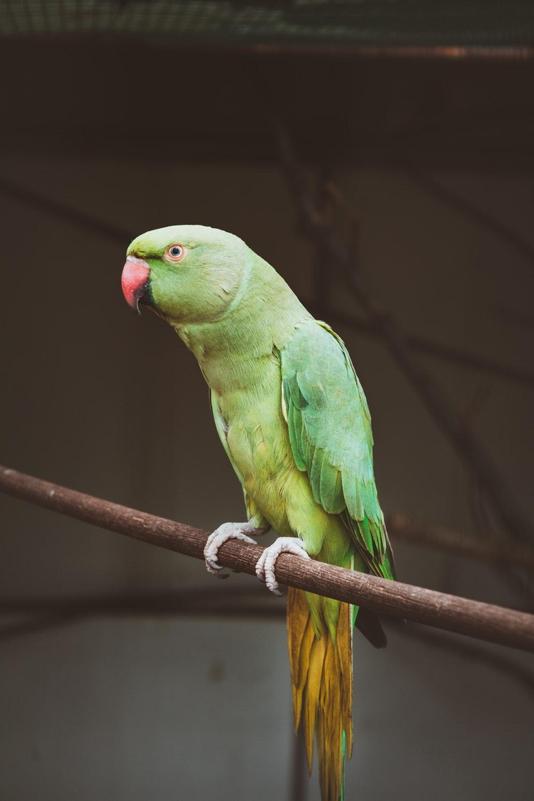 Parrot Pictures