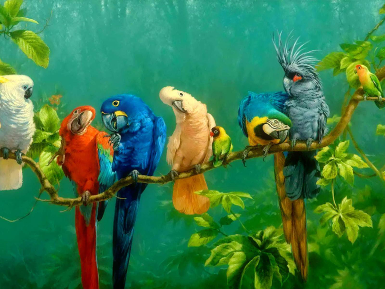 Parrot Wallpapers 5