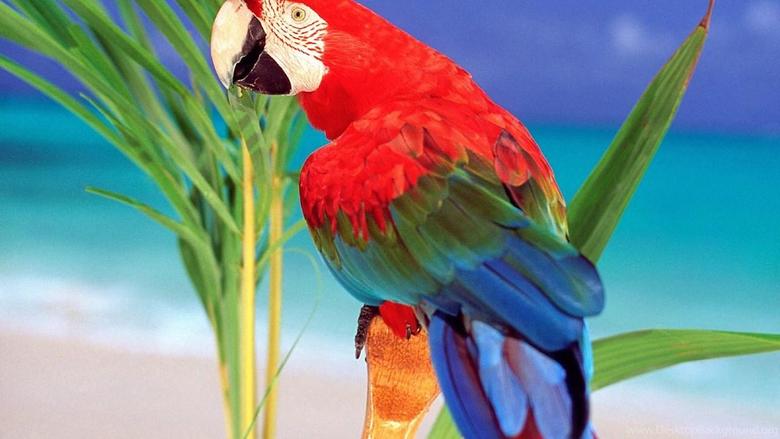 Parrot Hd Wallpapers Desktop Backgrounds