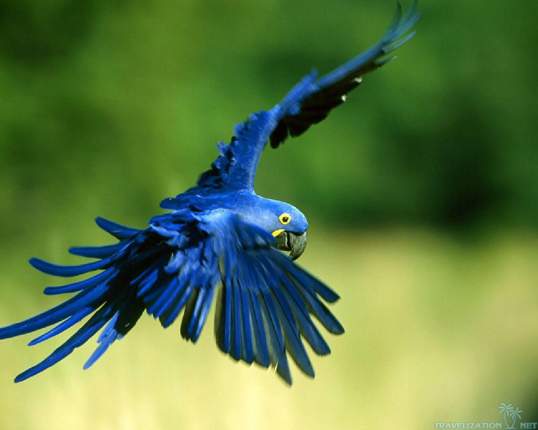 Parrot Wallpapers 26