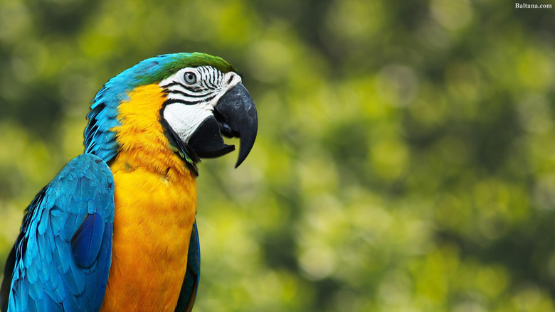 Parrot Wallpapers HD Backgrounds Image Pics Photos