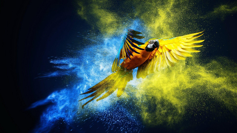 Birds Macaw Artwork Parrot Wallpapers Of Birds With Flowers for HD