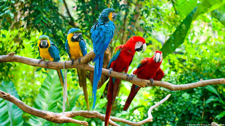 Image For Blue Macaw Parrot Wallpapers