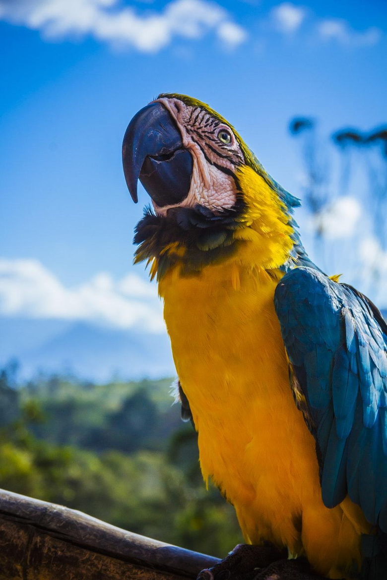 Macaw Pictures HD