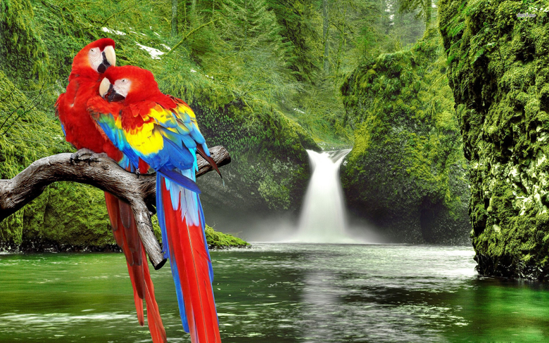 Best HD Macaw Wallpapers