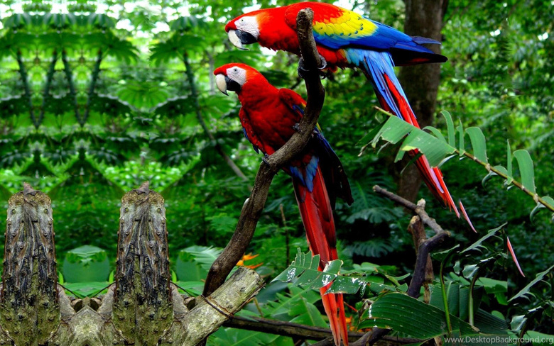 Macaw Parrot Bird Tropical