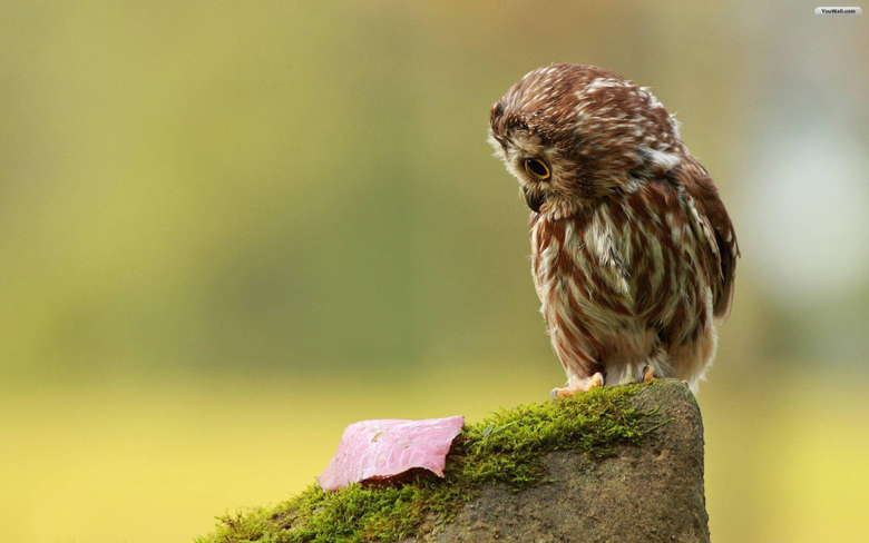 Wallpapers For Cute Baby Owl Wallpapers