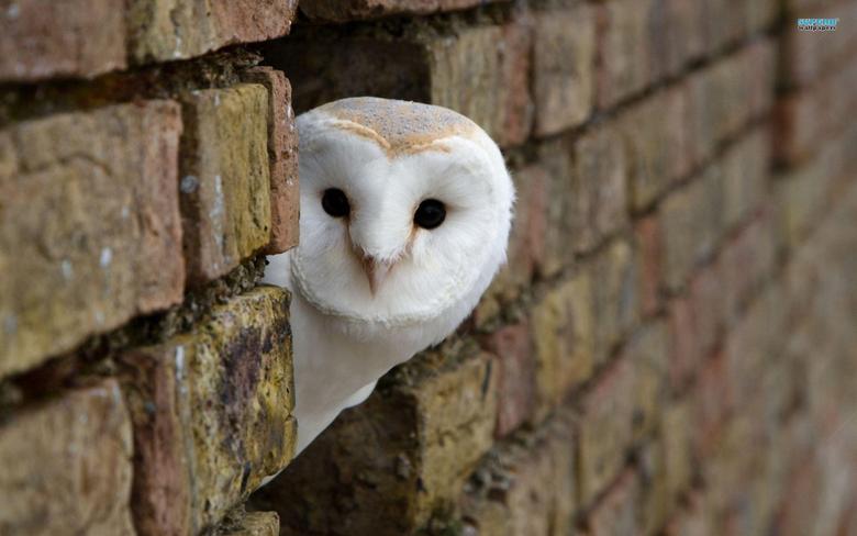 Interesting Owl Wallpapers Peeking Around Corner Building White