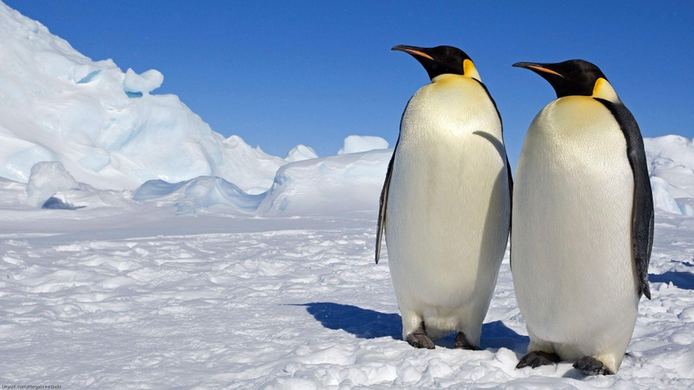 March Of The Penguins HD Wallpapers